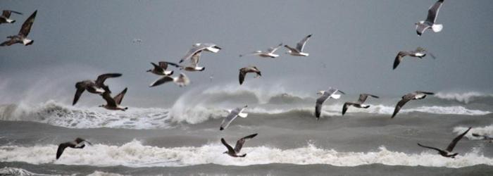 Volo-di-uccelli.jpg