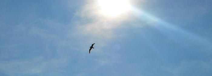 Aquila-in-volo.jpg